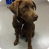 Adopt A Pet :: Juan - Cumming, GA