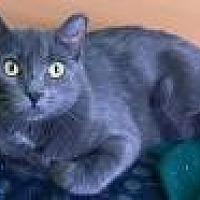 Adopt A Pet :: Embry - Livonia, MI