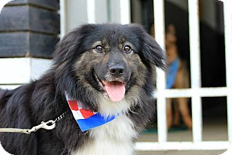 Shepherd (Unknown Type) Mix Dog for adoption in Sunnyvale, California - Jungle