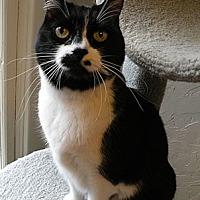 Adopt A Pet :: Cosette - Anacortes, WA