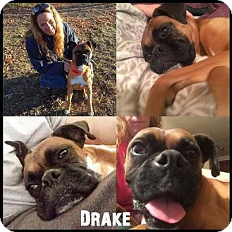 Boxer Dog for adoption in Ponca City, Oklahoma - Drake