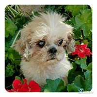 Adopt A Pet :: Honeybee - San Diego, CA