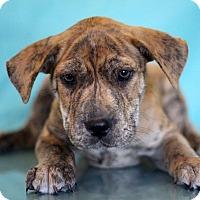Adopt A Pet :: Limp Bizkit - Waldorf, MD