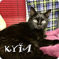 Domestic Shorthair Cat for adoption in Mooresville, North Carolina - KYIA BONDED WITH BUDDY