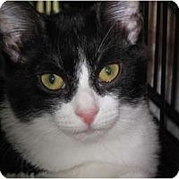 Adopt A Pet :: Rexie - Port Republic, MD