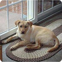 Adopt A Pet :: Katie - New Boston, NH