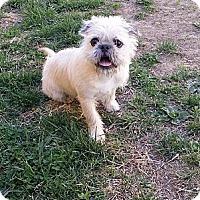 Adopt A Pet :: Alfie - Fort Riley, KS