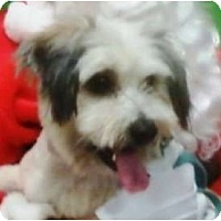 Adopt A Pet :: Sport - Duluth, GA