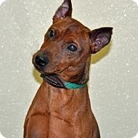 Adopt A Pet :: Hoagie - Port Washington, NY