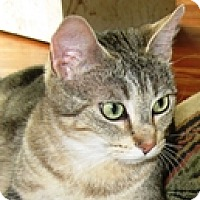 Adopt A Pet :: Maxine - Vancouver, BC