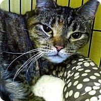 Adopt A Pet :: Portia - Medway, MA