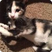Adopt A Pet :: Sally - East Hanover, NJ