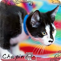Adopt A Pet :: Chapin - Germantown, OH