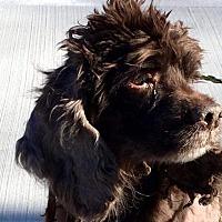 Adopt A Pet :: Kelly - Flushing, NY