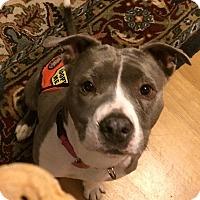 Adopt A Pet :: Velma - Brooklyn, NY