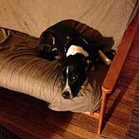 Adopt A Pet :: Kooper - Homer, NY