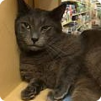 Adopt A Pet :: Houdini - North Haven, CT