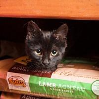 Adopt A Pet :: Albert - Elizabethtown, PA