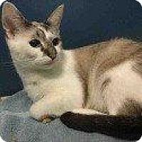 Adopt A Pet :: BABY GIRL - Hampton, VA