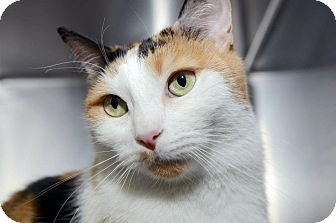 Calico Cat for adoption in New York, New York - Juliet