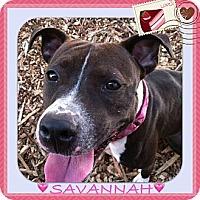 Adopt A Pet :: SAVANNAH - Dennis, MA