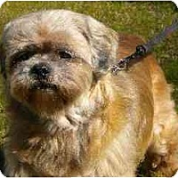 Adopt A Pet :: Gizzy - Washington, NC