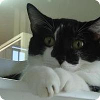 Adopt A Pet :: Quincy - Winter Haven, FL