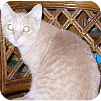 Adopt A Pet :: Perfect Tommy - Fayette, MO