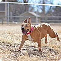 Adopt A Pet :: Angel - Cheyenne, WY