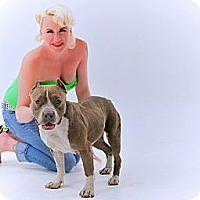 Adopt A Pet :: Gracie - Blanchard, OK