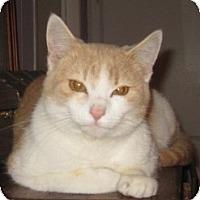 Adopt A Pet :: Goldy - Dallas, TX