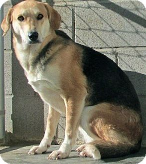 Hound (Unknown Type)/Shepherd (Unknown Type) Mix Dog for adoption in Tahlequah, Oklahoma - Lindsey