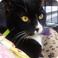 Adopt A Pet :: BASHFUL - Ridgewood, NY
