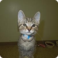 Adopt A Pet :: Acorn - Medina, OH
