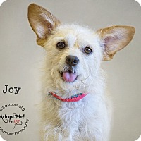 Adopt A Pet :: Joy - Phoenix, AZ
