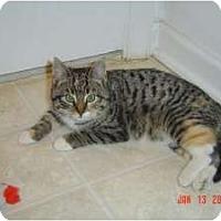 Adopt A Pet :: Bunny - Medford, NJ