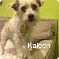 Adopt A Pet :: Kaleen - La Verne, CA