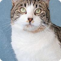 Adopt A Pet :: Patron - Encinitas, CA