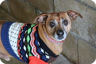 Dachshund Mix Dog for adoption in Yucaipa, California - Koby