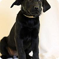 Adopt A Pet :: Bailey - Waldorf, MD