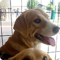 Adopt A Pet :: Taffy - New York, NY