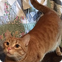 Adopt A Pet :: Swayze - Covington, KY