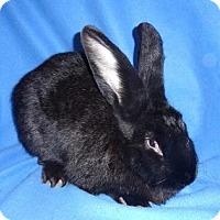 Adopt A Pet :: Princess - Woburn, MA
