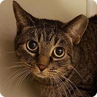 Adopt A Pet :: Lindsey - Grayslake, IL
