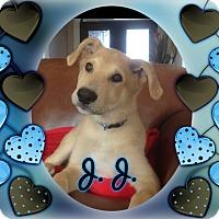 Adopt A Pet :: J.J. Watt - Houston, TX