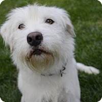 Adopt A Pet :: Aspen (foster) - Media, PA