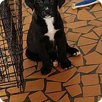 Adopt A Pet :: Dusty - Sylvania, GA