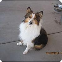Adopt A Pet :: Wallie - apache junction, AZ