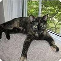 Adopt A Pet :: Harper - Arlington, VA