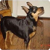 Adopt A Pet :: Madison - Nashville, TN
